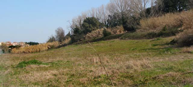 Cementificazione Pisana Estensi, verde distrutto e diritti inventati