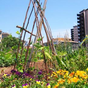 È boom di orti urbani a Roma, crisi e voglia di natura fanno riscoprire la tradizione