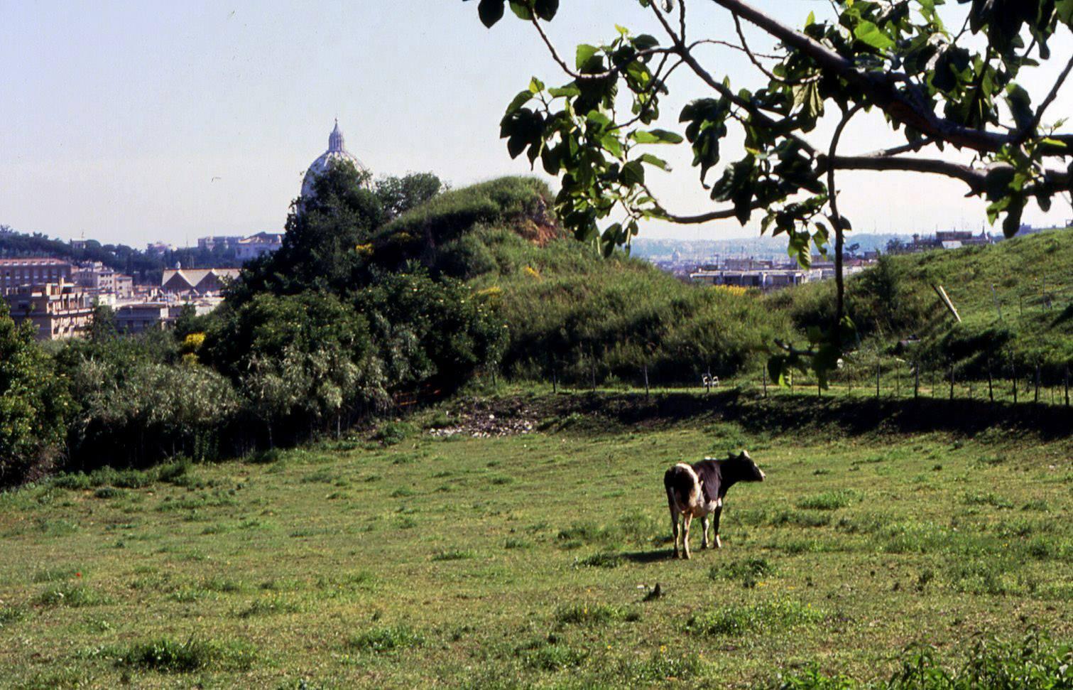 Uno scorcio di Parco Piccolomini