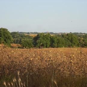 Riserva di Decima Malafede, le osservazioni di Salviamo il Paesaggio per la tutela dell'area