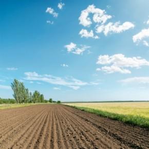 """Slow Food: """"Il cemento non si mangia"""""""