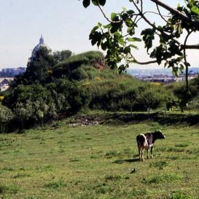 Parco Piccolomini, la fondazione paga il conto