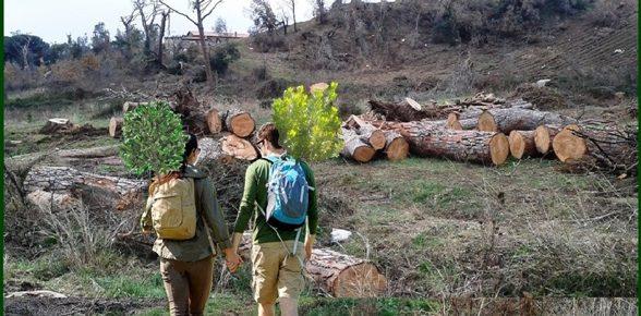 Marcia degli alberi 2017, la Natura cammina con l'uomo
