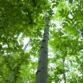 """Marcia degli alberi a Ladispoli, Salviamo il Paesaggio cuore dell'iniziativa. """"C'è bisogno di azione costante affinché le aree pubbliche restino verdi""""."""