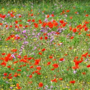 Consumo di suolo, legge arenata in Parlamento. Appello di Salviamo il Paesaggio a tutti i comuni