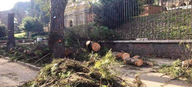 A Roma strage di alberi nel centro storico tutelato