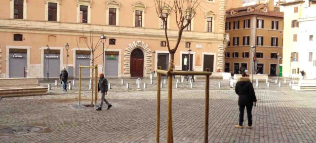 L'incredibile storia degli alberi in piazza S. Silvestro