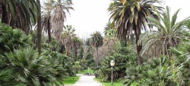 Regolamento del Verde e del Paesaggio urbano per Roma, la verità per spegnere le polemiche