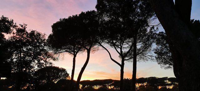 Toumeyella, appello per la difesa dei pini minacciati dal parassita